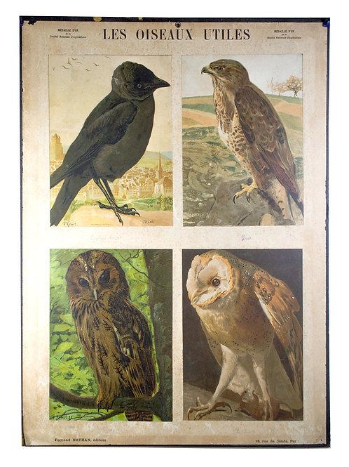 French Chromolithography 1879 birds school prints school aid #2