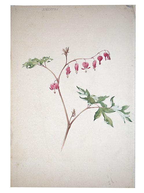 FRENCH aquarellist painting of flower Henri Adam 1879