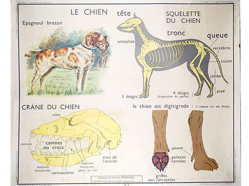 FRENCH school aid poster Rosignol 1950 dog and science