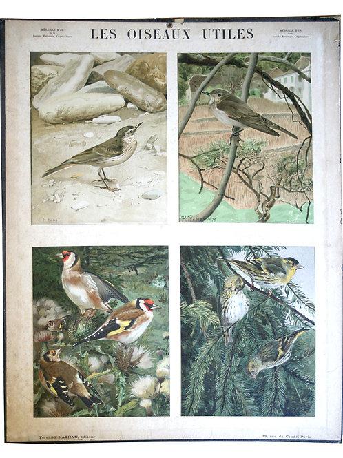 French Chromolithography 1879 birds school prints school aid #3