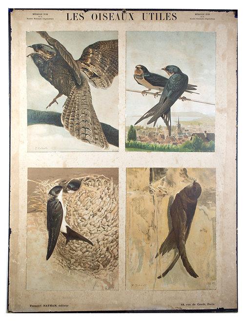 French Chromolithography 1879 birds school prints school aid #1