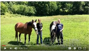 Little Brook Farm Poco & Pelli