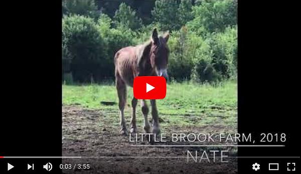 Little Brook Farm 2018 video