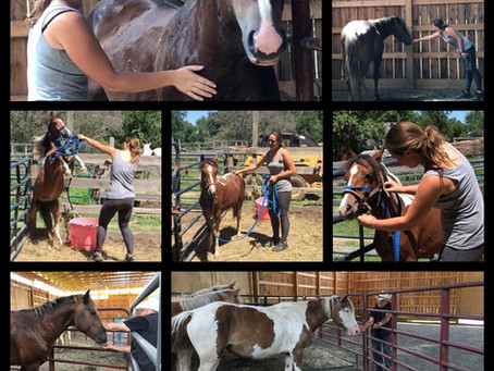 15 Horses Rescued: All Hands on Deck