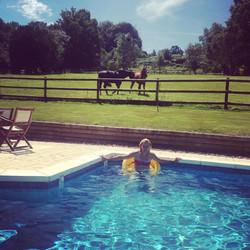 chevaux piscine.jpg