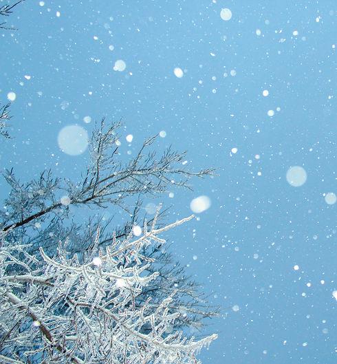 Snow Falling From Sky_edited.jpg