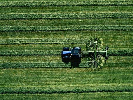 Hemp Cultivation: 5 Best Practices Explained