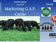 Marketing G.A.P. Cattle - Webinar Recording