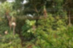 Panorâmica_agência_edited_edited.jpg