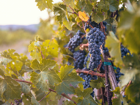 Ludor Wines