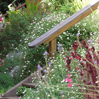 מדרגות בגינה טבעית.jpg