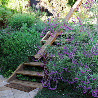 מדרגות בגינה.jpg