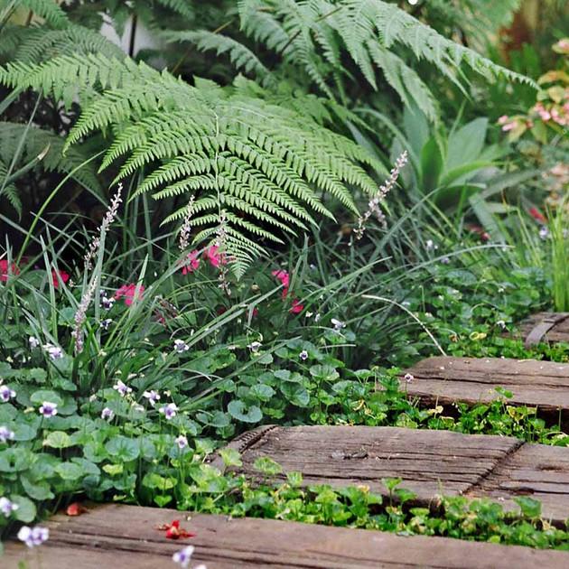 שביל אדנים בגינה מוצלת.jpg