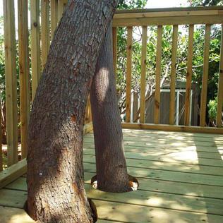 משטח משולב עם גזע העץ.jpg