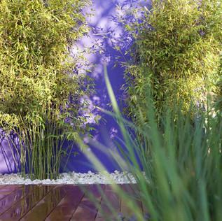 אור וצל בתחרות עיצוב הגינות הארצית.jpg
