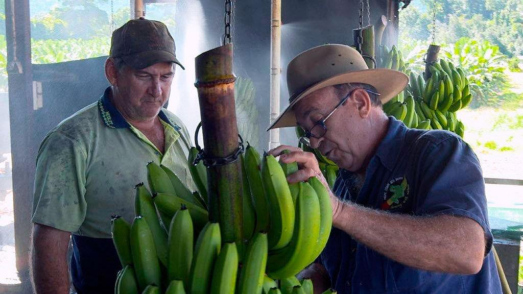 Fantastiska bananer