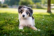 Puppy-Contact.jpg