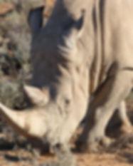 Big5 safari close to Cape Town.jpg