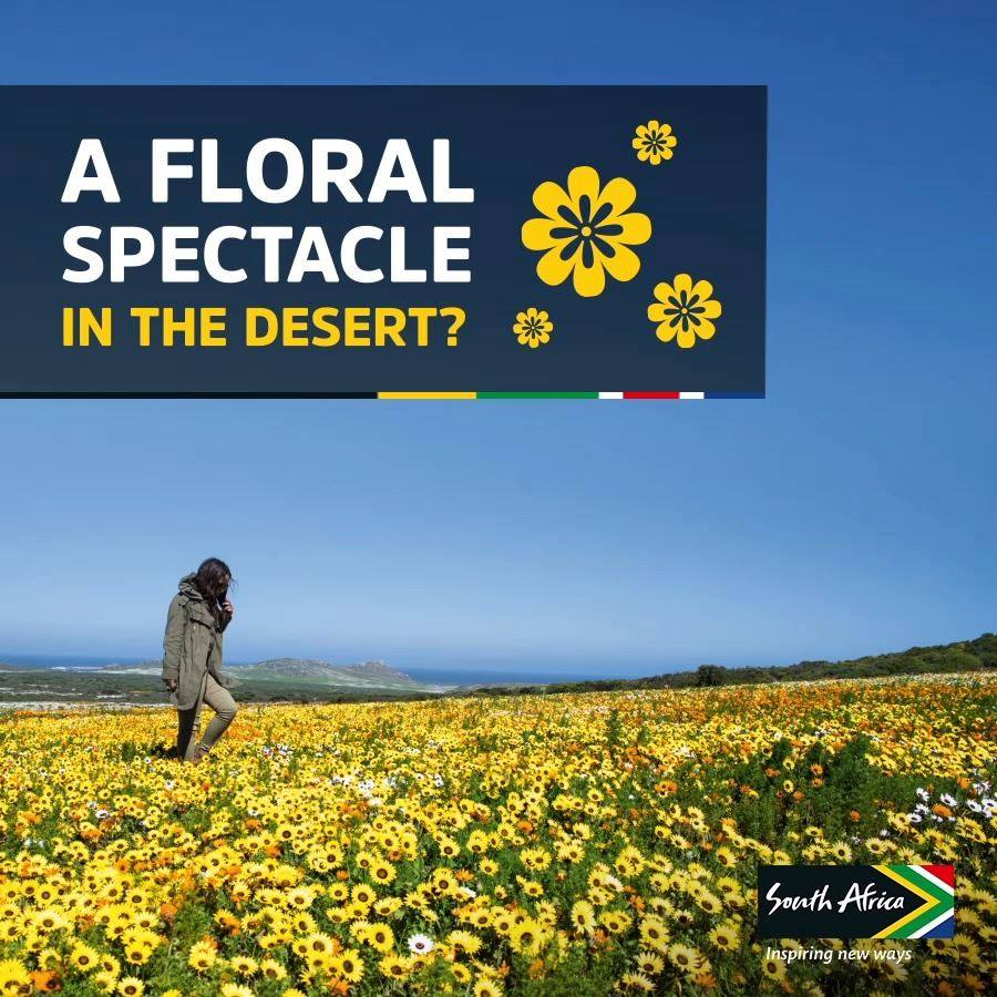 A Floral Spectacle in South Africa