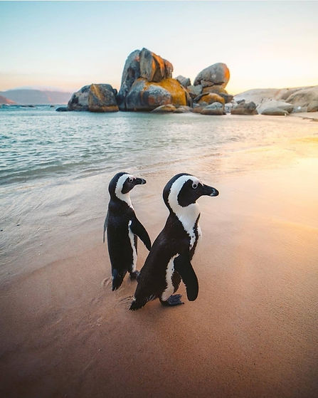 Private Tour of African penguins with The Cape Discovered