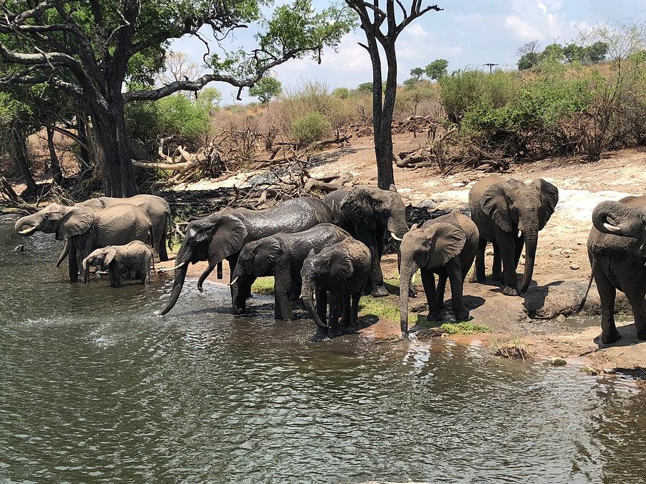 Chobe elephants.jpeg