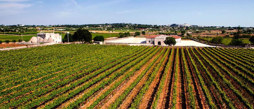 wine tour full day vigneti valle d'itria