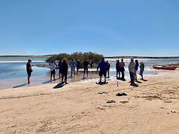 Working together to assist seagrass recovery at Shark Bay