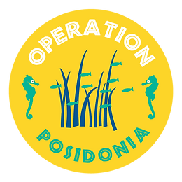 Threatened plant translocation case study: Posidonia australis