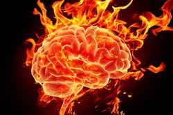Hjernen og nervesystemet