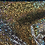 Thumbnail: Oro Vitral