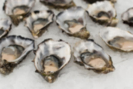 Sydney-pacific-oyster