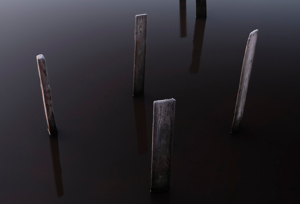 Stilts, Cupwith Reservoir