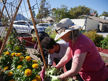 Tending to a garden