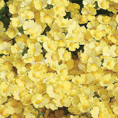 Nemesia Hybrid Sunsatia Lemon