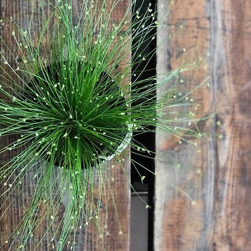 Colorgrass Live Wire Fiber Optic Grass
