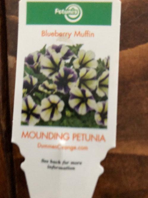 Petunia Blueberry Muffin