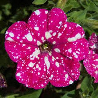 Petunia Headliner  Pink Sky