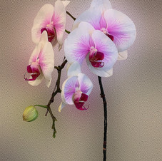 Orchid perfection_