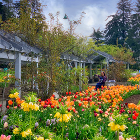Tulips, Stanley Park, Vancouver_