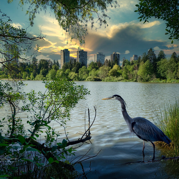 Blue Heron and City Skyscape