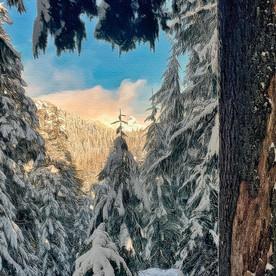 Cypress Hike.jpeg