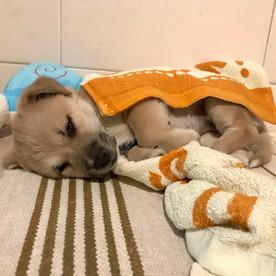 Rescue puppy, Beijing.