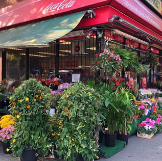 Corner store flowers. Denman Street, Vancouver.