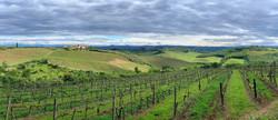Vineyards behind our Tuscany villa.