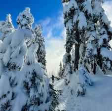 Hollyburn Snow Hike