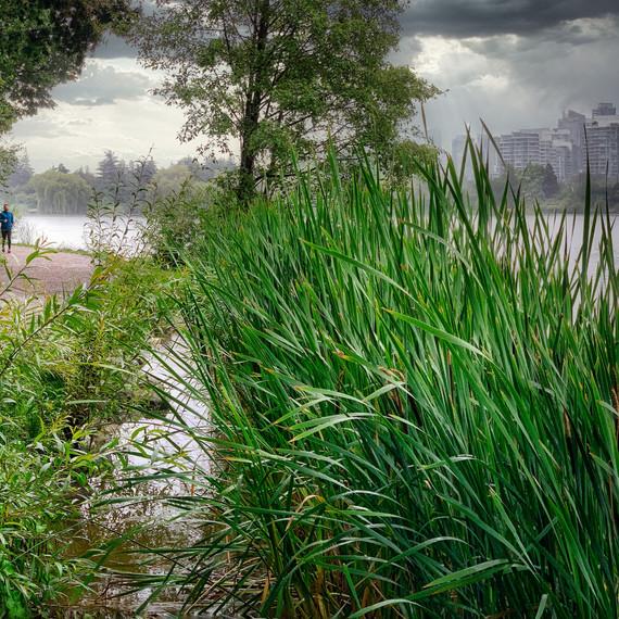 Rainy Lost Lagoon, Stanley Park_