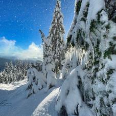 Hollyburn Mt., Tree Snow Shower_