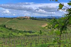 Vineyards behind our villa.