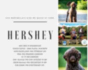 Hershey Health Flyer.jpg