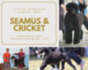 Seamus & Cricket Flyer 01.jpg